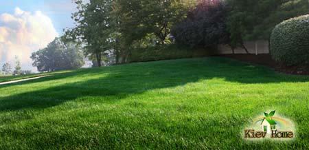 Чистый ухоженный газон