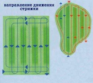 схема напрямку стрижки