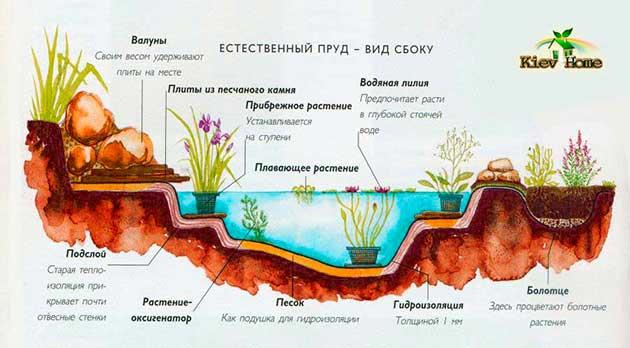 Посадка растений в пруде