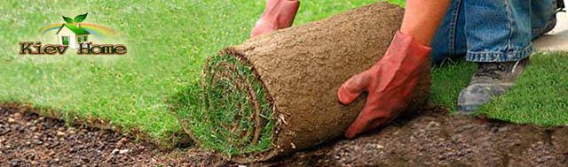 створення газону