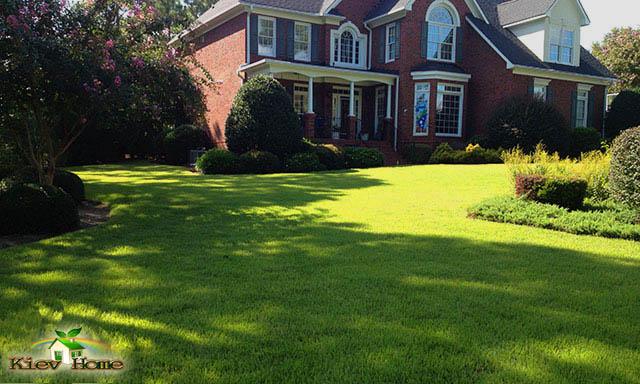 газон біля будинку