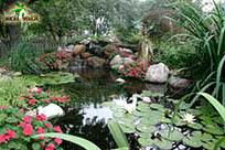 Водный сад с множеством декоративных растений
