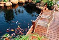 Декоративный водоем с множеством кои рыб