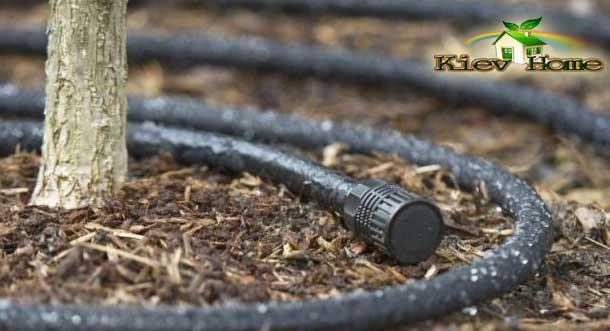 мікрокрапельний полив в Києві