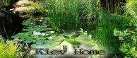 пруд с растениями и рыбой