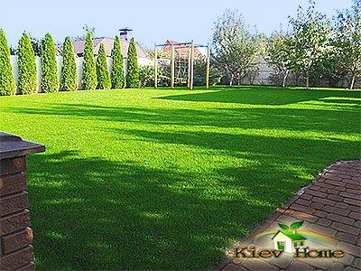 Зеленый газон на участке