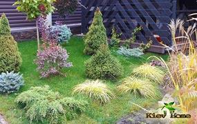 Декоративные растения в дизайне участка