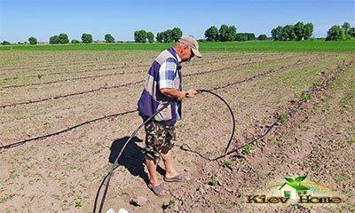 Капельный полив на поле малины в Киеве