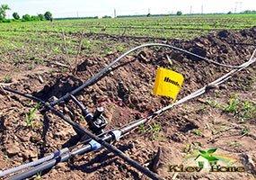 Монтаж системы капельного полива на поле с малиной
