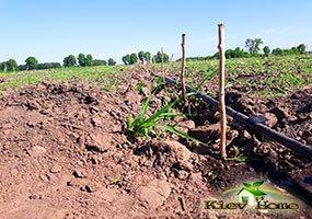 Капельный полив малины в киевской области