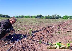 Сборка системы капельного полива на поле