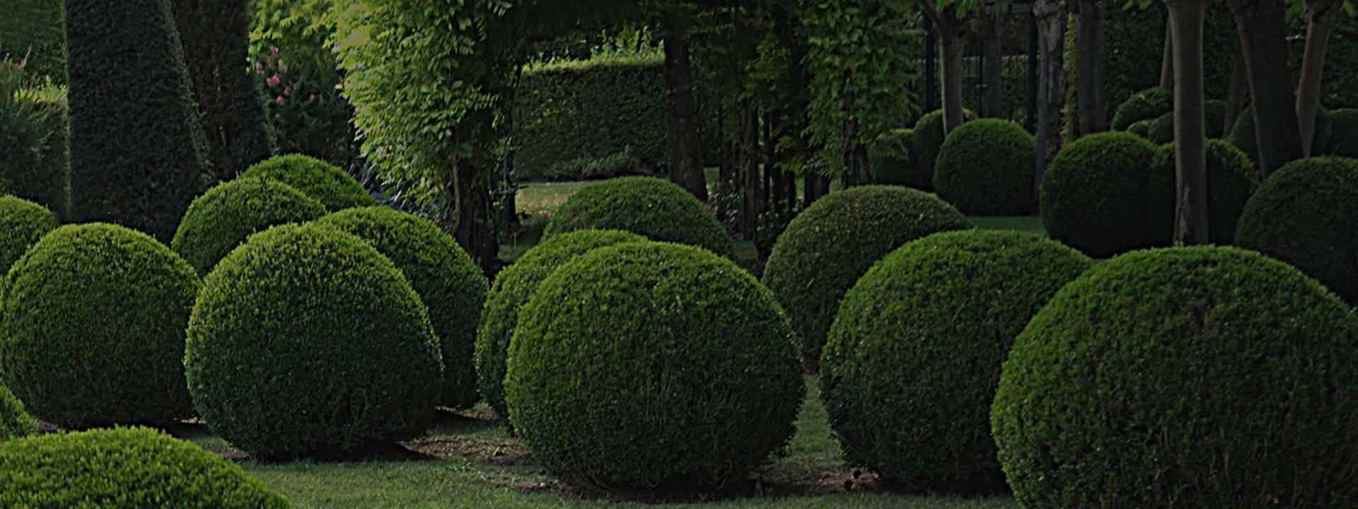 Озеленение участка круглыми самшитами